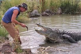 man feeding an alligator